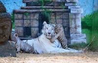 Athens private tour: Visit at Attica Zoological Park, starting from ?130 - Keytours, Greece